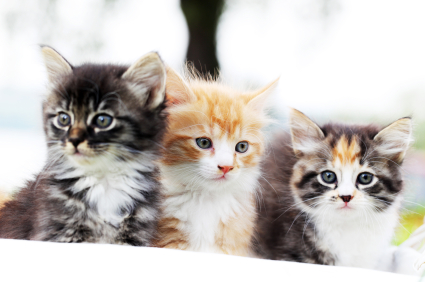 Group of three beautiful cats.