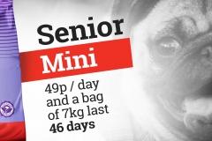 Senior Mini